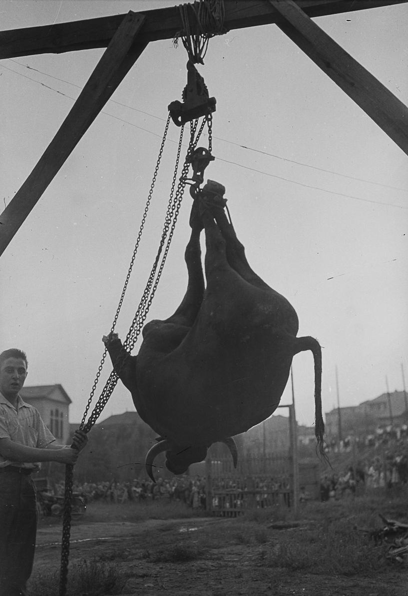 Esplugues de Llobregat. Barcelona, 1955